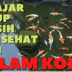 """Ramadhan dan Filterisasi, """"Belajar Hikmah"""" Hidup Bersih dan Sehat dari Kolam Koi"""