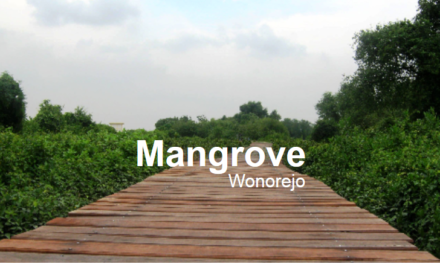 Jalan-Jalan Di Jogging Track Hutan Mangrove Wonorejo Surabaya