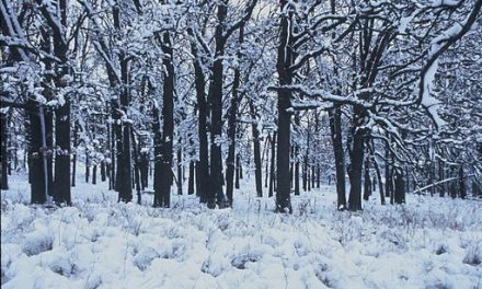 Stopping by Woods on a Snowy Evening – English Podcast – Helmi Yahya Mahendra