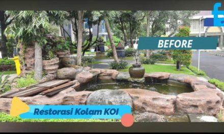 Restorasi Kolam KOI PENS